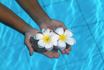 american911150300148.jpg - frangipani flowers in hands in the swimming pool